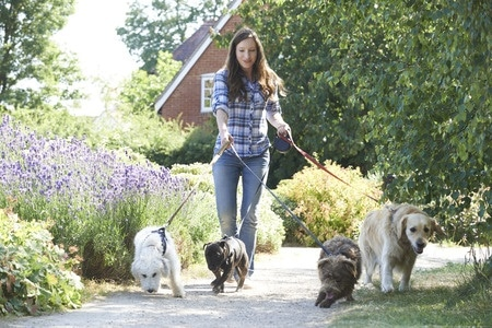 how to make money with a dog walking / pet sitting business